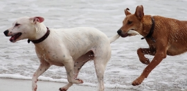 Bellaria - Igea Marina per cani: spiagge e hotel pet friendly