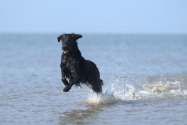 Cesenatico per cani: Spiagge e Hotel Pet Friendly